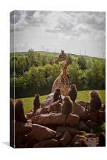 Giraffe and monkeys, Canvas Print