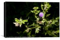 Thistle in Bloom, Canvas Print