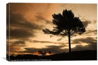 Silhouette Trees, Canvas Print