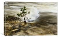 River Tree, Canvas Print