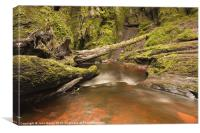 Devil''s Pulpit, Finnich Gorge, Canvas Print