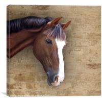 Chestnut Pony, Canvas Print