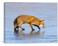 Fox on ice, Canvas Print