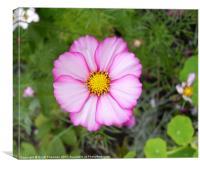 Simple Flower, Canvas Print