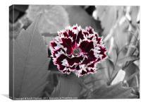 Selective colour flower, Canvas Print