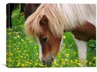 Horse, Canvas Print