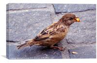 Snacking Bird