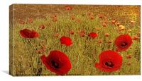 Poppy drift, Canvas Print