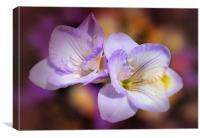 Lilac tones, Canvas Print