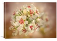Pear blossom, Canvas Print
