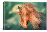 A horse called Copper, Canvas Print