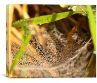No spider at home, Canvas Print