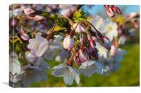 Flowering spring, Canvas Print