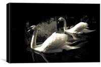 PAIRED SWANS, Canvas Print