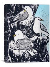 Black-Footed Kittiwakes, Canvas Print