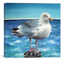 Herring Gull, Canvas Print