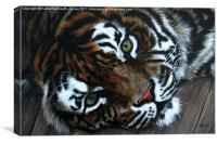 Sumatran Tiger, Canvas Print