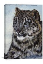 Snow Leopard, Canvas Print