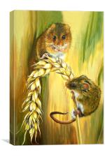 Harvest Mice, Canvas Print