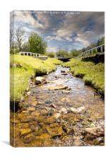 Babbling Brook, Canvas Print