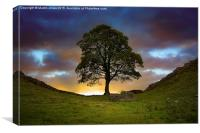 The Sycamore Gap, Canvas Print