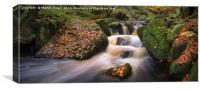 Autumnal Woodland Stream, Canvas Print