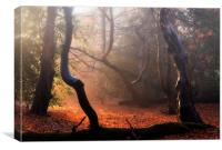 Autumn in Epping Forest, Canvas Print