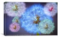 Dandelion Delight, Canvas Print