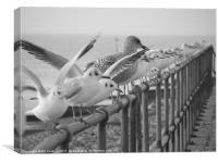 Gulls, Canvas Print