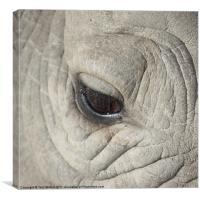Eye of the Rhino, Canvas Print