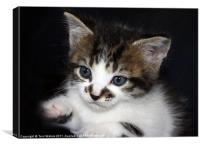 Cute Kitten, Canvas Print
