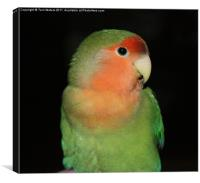 The Love Bird, Canvas Print