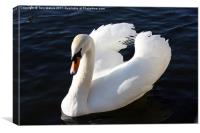 Swan on the Itchen, Canvas Print