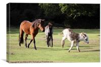 Animals of the New Forest, Canvas Print