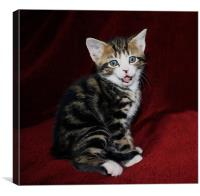 Naughty Kitten Pokes Out Tongue, Canvas Print