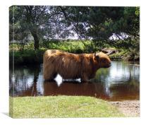 Highlander cooling off, Canvas Print