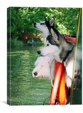 Three Dogs on a Narrow Boat, Canvas Print