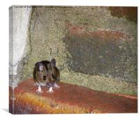 Mini the Mouse, Canvas Print