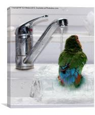 The Lovebird's Shower, Canvas Print