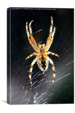 Incy Wincy Spider, Canvas Print