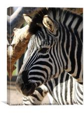 The Zebra's Face, Canvas Print