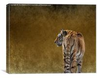 Amur Tiger, Canvas Print