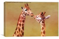 Je T'aime Giraffes, Canvas Print