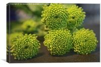 Green Buttons, Canvas Print