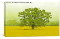 Tree In A Field Of Gold, Canvas Print