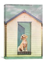 Beach Hut Puppy, Canvas Print