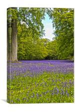 English Bluebells , Canvas Print