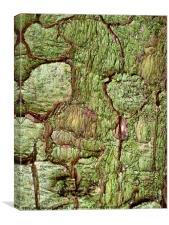 Green bark in forest walk, Canvas Print