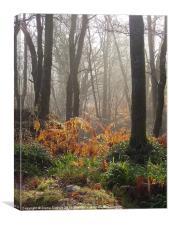Wet ferns & misty forest walk, Canvas Print