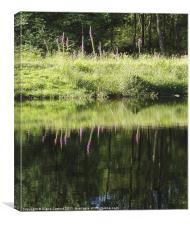 Foxgloves Reflected, Canvas Print